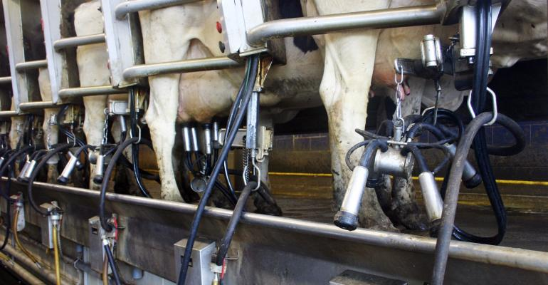 Row of cows in milking parlor