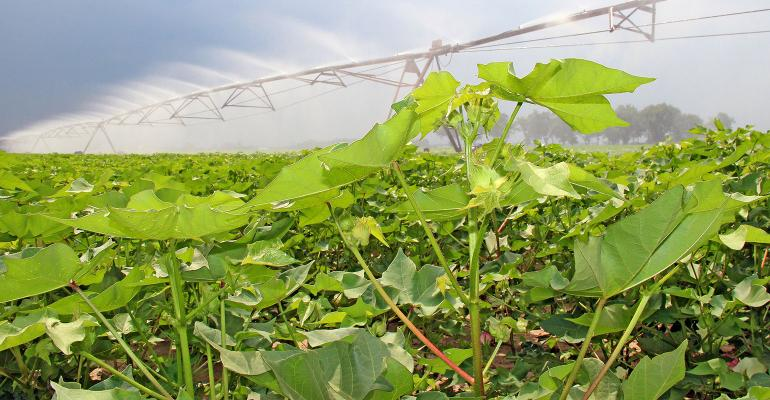 DFP-Bennett-Cotton-Irrigation-Pivot.jpg