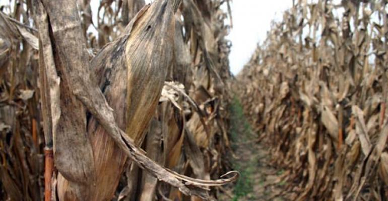 Ethanol vote 'severely disappoints' corn growers
