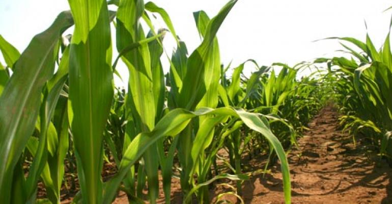 Insect pest management in corn and sorghum