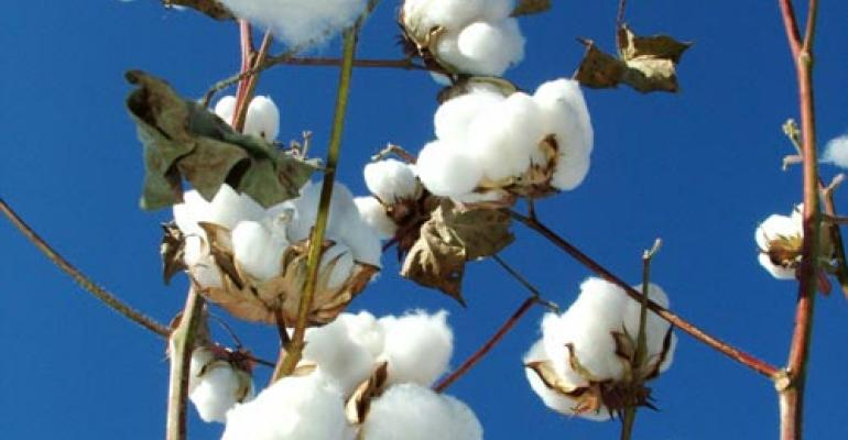 Dollar cotton builds excitement for new cotton varieties