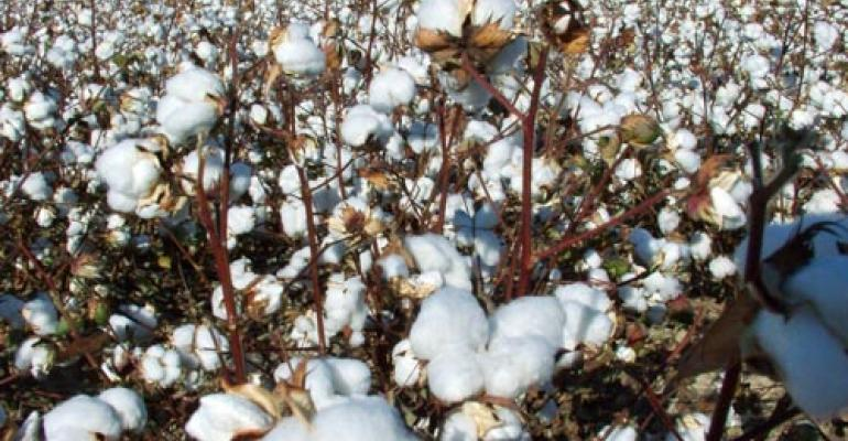 Cotton inputs – who's making the decisions?