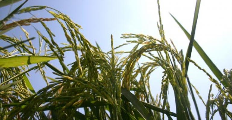 Arkansas rice disease update