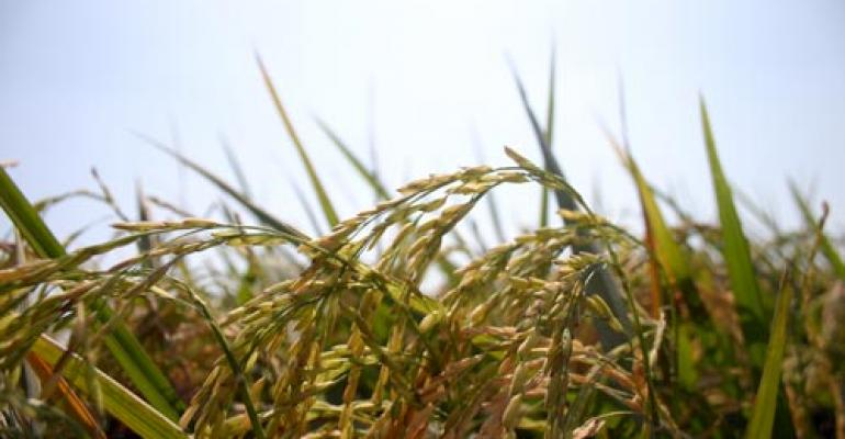 Sustainability of rice farming: LSU AgCenter, Kellogg Co. collaborate