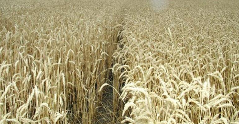 When to plant wheat