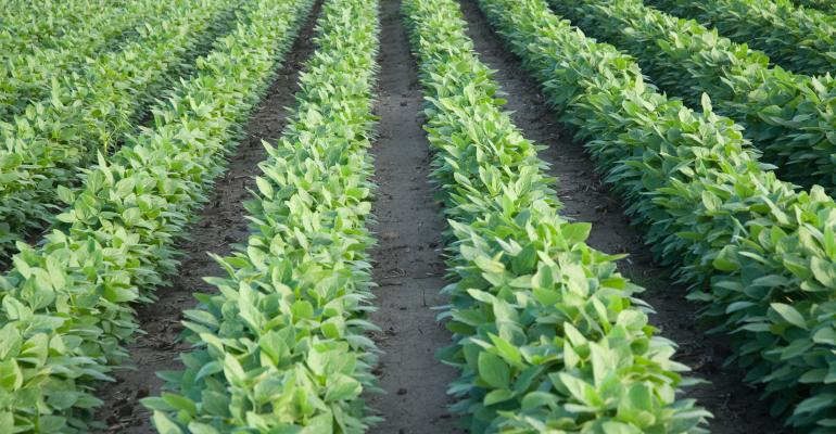 Study shows dicamba-resistant soybeans effective