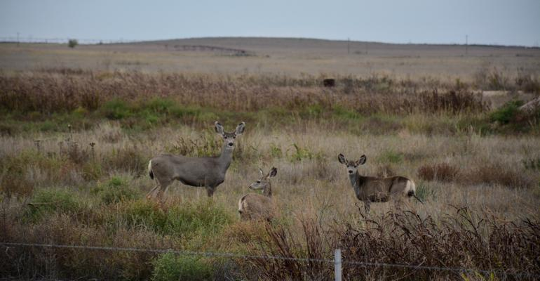 Deer Sandhills (1 of 2).jpg