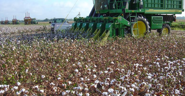 Cotton production up, corn drops signficantly