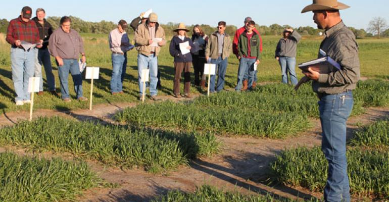 Cool-season forages can boost production, cut feed costs