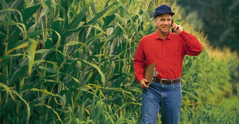 Farmer walking in cornfield talking on cell phone.