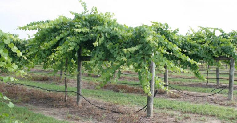 Growing wine grapes in Michigan a balancing act