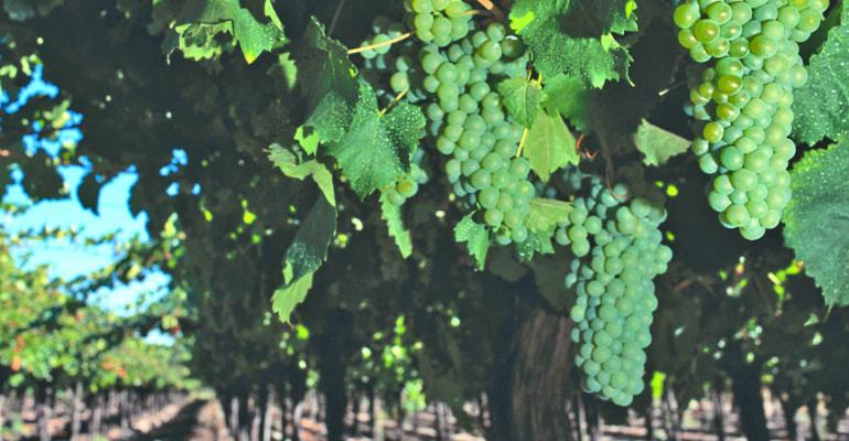 Beyond sunburn: High heat damage in vineyards