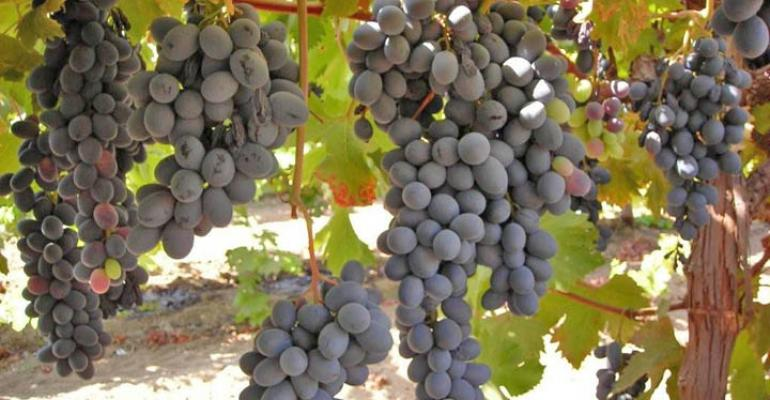 Bud differentiation questions linger for 2011 grape crop