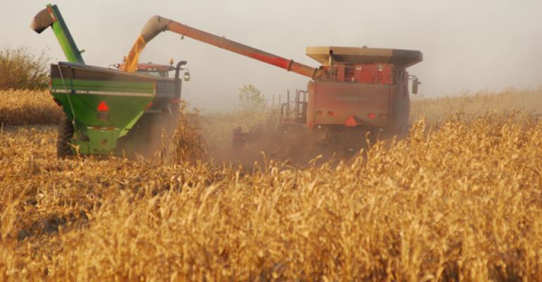 Harvesting corn at the Vern Peine farm rural New Trier MN Photo by Susan Winsor