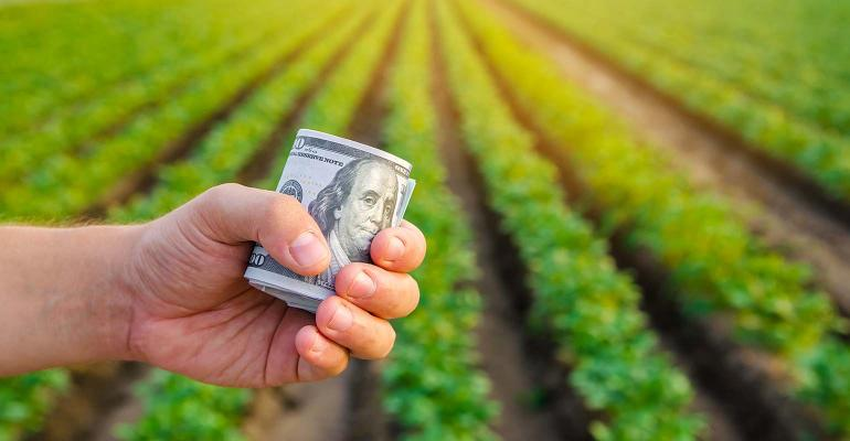 Dollar bills in the hands of a farmer on a background of plantation.