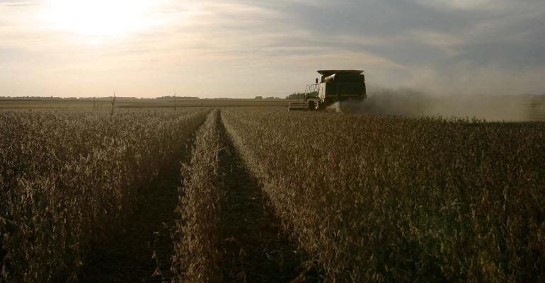 Harvesting soybeans in the sunset.