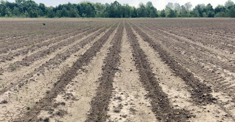 Newly planted crops are susceptible to wild hog damage