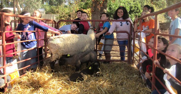Children petting sheep at Chico State farm
