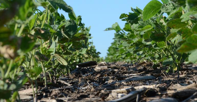 green soybean plants at ground level