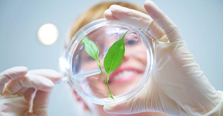 Biotech Female Scientist looking at plant in petri dish.
