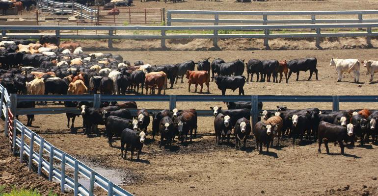 Overview of Nebraska feedlot in summer