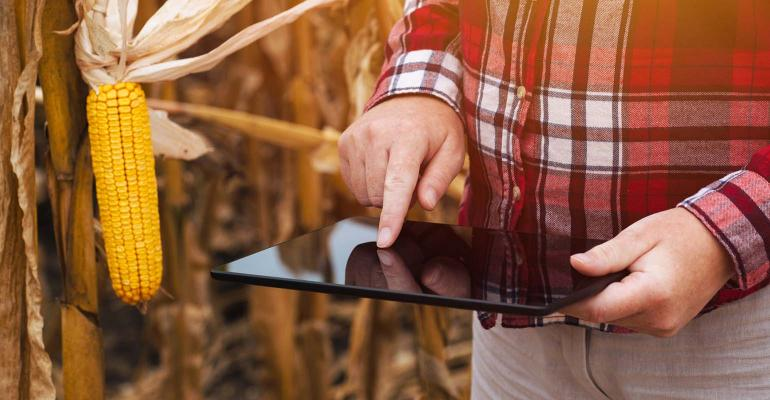 farmer working on tablet computer in harvest ready corn