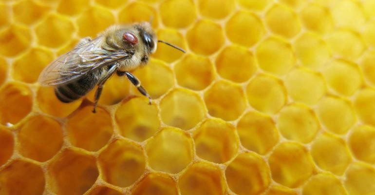 One of the biggest problems to honeybee population is the varroa mite.