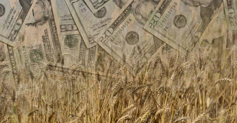Concept of making money in ag with $20 bills in ripe wheat.