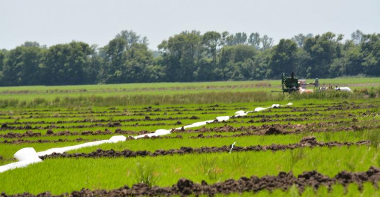 Flexible irrigation pipe carries water to bays in rice field in Mississippi