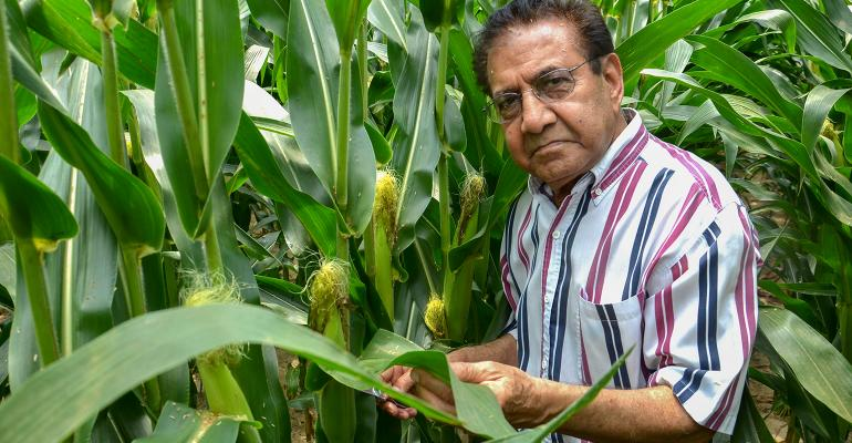 Dave Nanda inspects the ear leaf of a corn plant.
