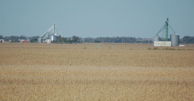 soybean field with grain bins in background