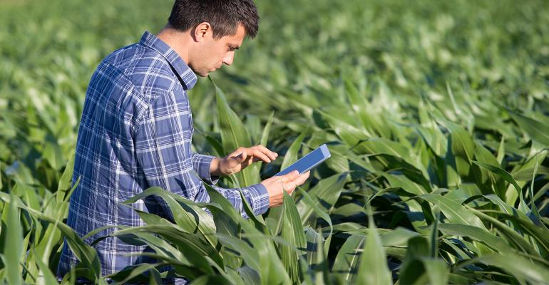 man with tablet in corn field