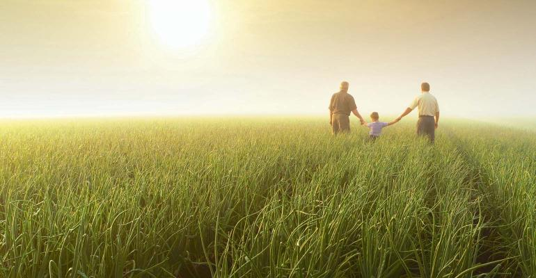 Three generations in a small grain field with sunny glow. 1540x800