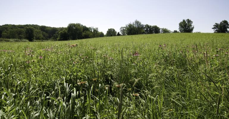 CRP-meadow-land-2