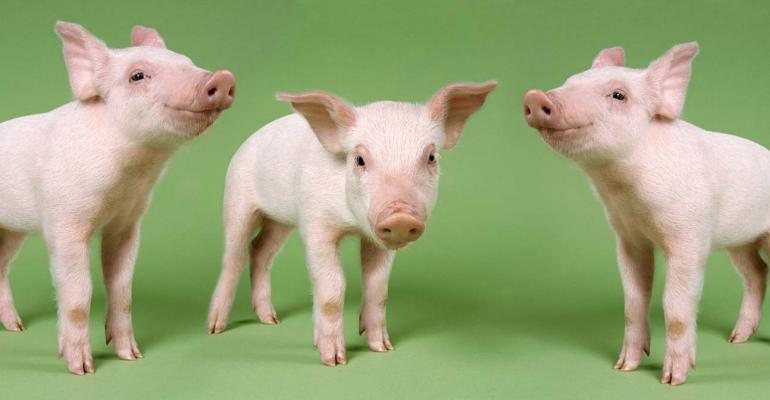 pigs-Digital-Vision-ThinkstockPhotos-1540x800