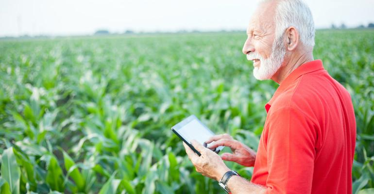 Smiling senior, gray haired, agronomist or farmer in red shirt using tablet in corn field. Looking into distance. Side view.
