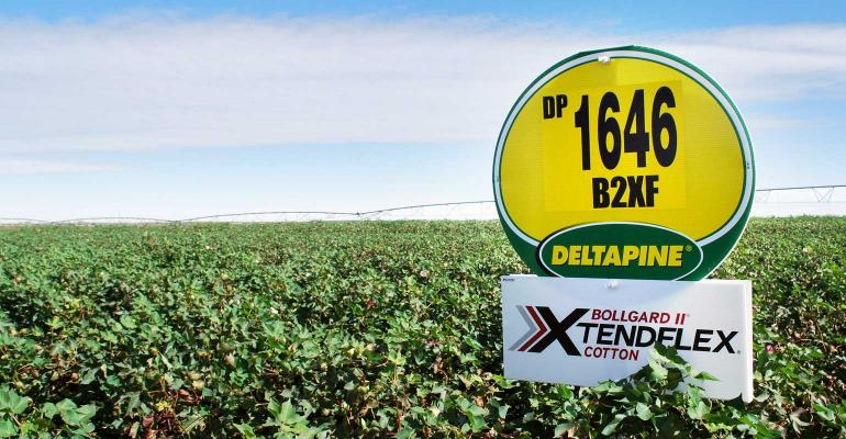 Deltapine sign in a Texas cotton field