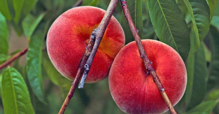 Peach growers gain hope from efficient thinning machine