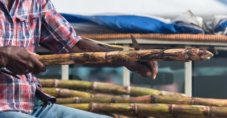 Marie-Galante island in Guadeloupe, man who peels some sugar cane on the market