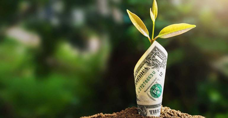 plant growing with bank note on soil and sunset