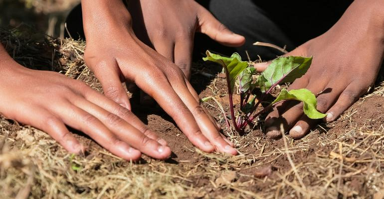 Child hands planting vegetables in soil