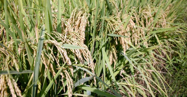 NASS rice report shows record average production, lower yield per acre