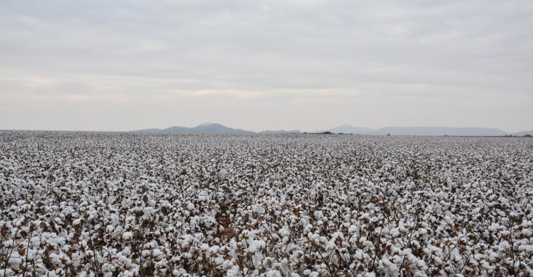 SWFP-HUGULEY-17-Okla-cotton2-0216.jpg