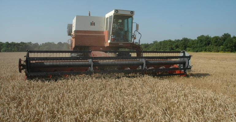SWFP-RonSmith-wheat=Harvest - Copy.JPG