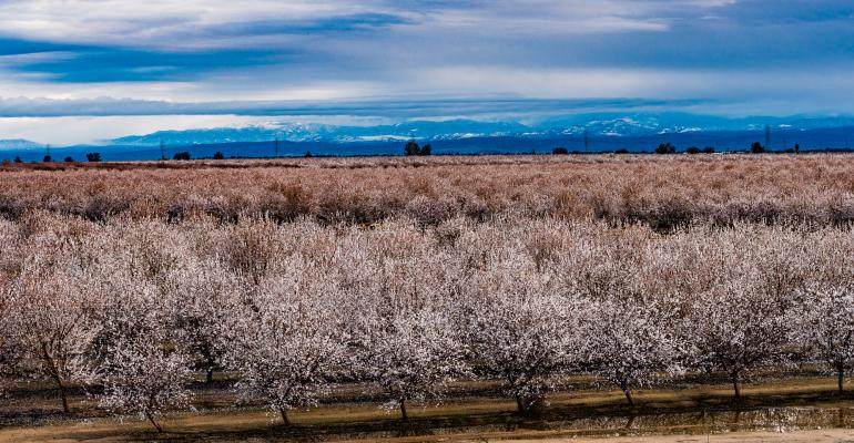 California almond bloom in bad weather