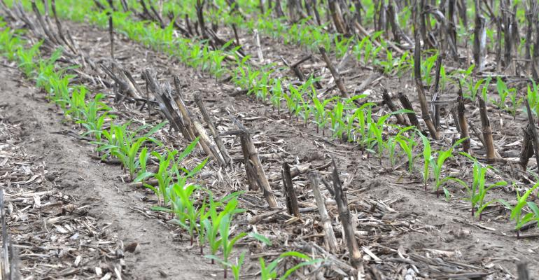 Strip-till_4818 copy (2)