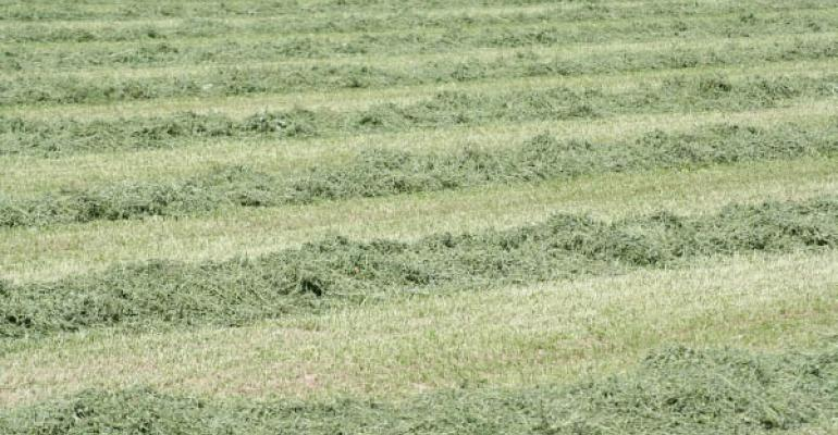 Radical environmentalists continue to go after Roundup Ready alfalfa