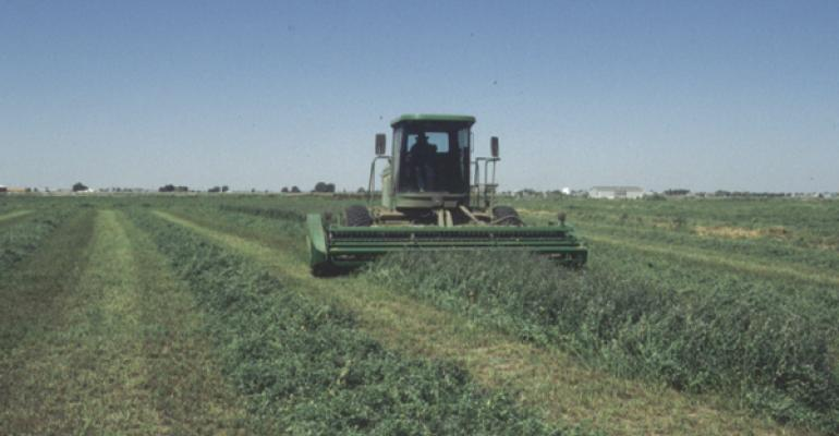 Roundup Ready alfalfa available for spring planting