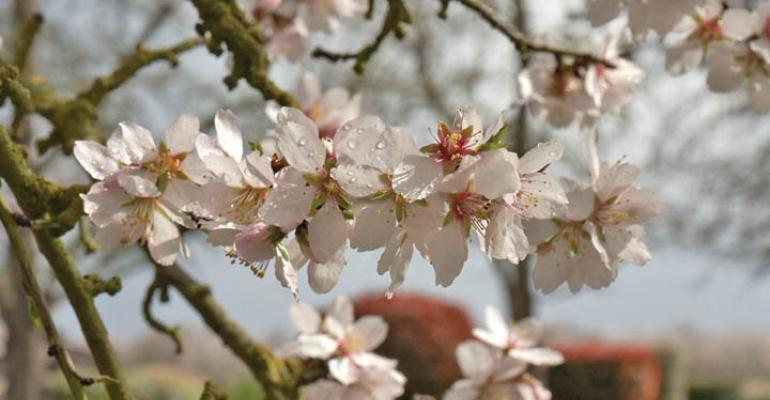 Implementing frost protection for almonds