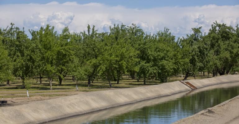 Almond trees next to irrigation canal